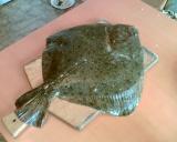 Рыба Черного моря